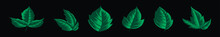 Set Of Poison Ivy Plants Cartoon Icon Design Template With Various Models. Vector Illustration Isolated On Black Background