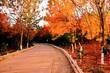 Leinwandbild Motiv Road Amidst Trees During Autumn