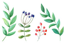 Green Twigs, Red, Violet Berries On White Background.Spring,summer Set Of Leaves.Hand Painted Botanical Illustration