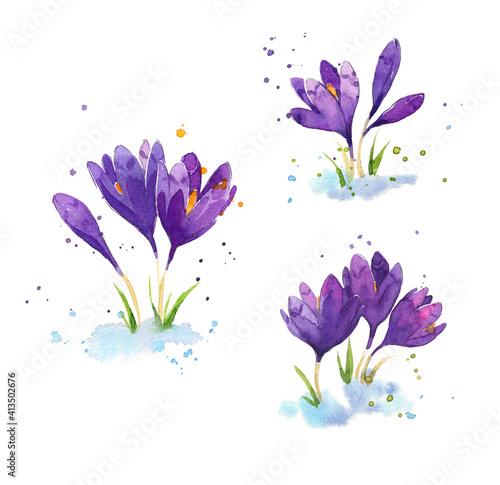 Foto set of watercolor crocuses, early spring flowers illustration