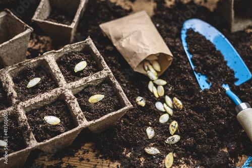 Fototapeta Sowing pumpkin seed in soil