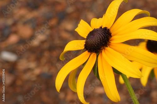 Vászonkép Close-up Of Yellow Daisy Flower