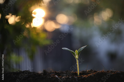 Fotografie, Obraz small sprout plant growing under sunlight