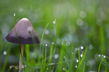 Close-up Of Wet Mushroom In Grass