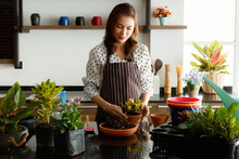 Beautiful Asian Woman Wearing Apron Preparing And Arranging Pods Of Small Flowers And Little Tree For Decorating In A New Open Coffee Shop