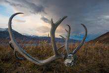 Close-up Of Antler On Field Against Sky