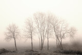 Sylwetki drzew na skraju zamglonych pól