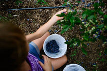 Overhead View Of Girl Picking Blueberries From Tree While Kneeling In Farm