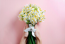 Cropped Shot Of Female Hand Holding A Bright Bouquet Of Yellow Daffodils With Lush Buds Tied With Silk Ribbon. Woman With Spring Flowers. Pale Pink Textured Background, Copy Space For Text. Top View.