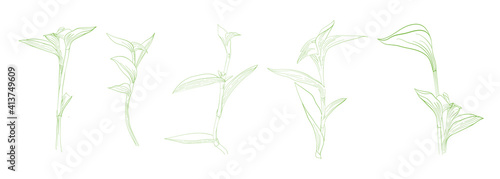 Slika na platnu set of vector hand drawn sketched grass leaves