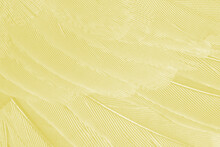 Beautiful Vibrant Yellow Feather Texture Background