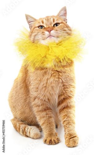Red cat in a yellow collar. © voren1
