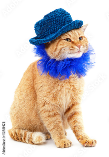 Red cat in a blue collar and knitted blue hat. © voren1