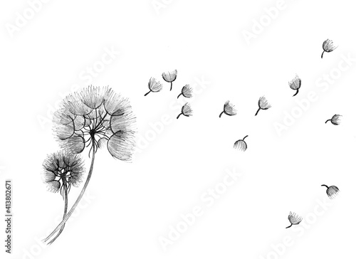 Fototapeta dmuchawce na wietrze - rysunek ołówkiem - pionowo  obraz