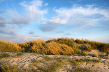 The Sand Dunes At West Wittering Beach, West Sussex, UK
