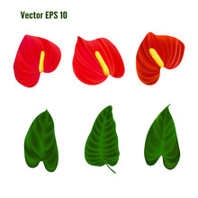 Tropical Plant With Green Leaves And Red Flowers. Vector Illustration.