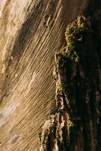 Bright Bark And Moss On Textured Tree