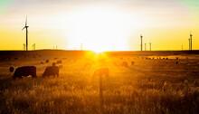 Colorado Wind Farm Located On A Wheat Field During Sunrise