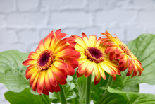 Red And Yellow Flowers.Red And Yellow Flowers. Concept Of Love.