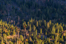 View Of Yosemite Valley Forest From Top Sunrise Gold Light