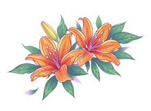 Hand Drawn Bunch With Orange Lily Flowers