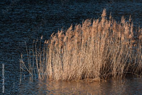 Obraz na plátně coucher de soleil sur l'étang et les roseaux