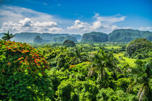 UNESCO World Heritage Valley On Cuba In The Caribbean. Mogotes - Hills Overgrown With Banana Trees And Tobacco Plantations