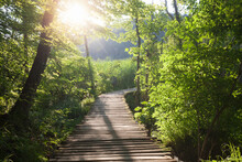 Wooden Path Across The River At Sunny Morning