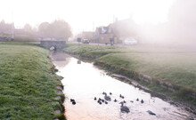 Ducks With Baby Ducks Swimming In A Stream In The British Country Side
