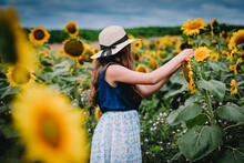 Girl Picking Sunflowers In A Field In Bryan, Ohio