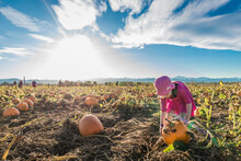 Girl Picking Pumpkin While Standing At Organic Farm Against Sky During Sunny Day