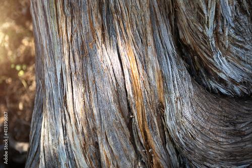 Fotografie, Obraz The texture of a dry juniper tree trunk