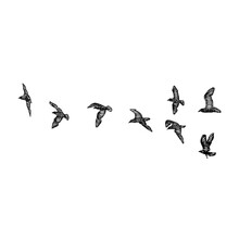 Set Of Birds Flock, Flying Seagulls, Hand Drawn Textured Sketch Of Sea Marine Birds. Concept For Sail Or Sailor Lifestyle. Vector.