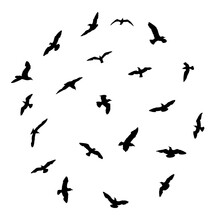 Silhouette Set Of Flying Seagulls Birds On White Background. Inspirational Body Flash Tattoo Ink Of Sea Birds. Vector.