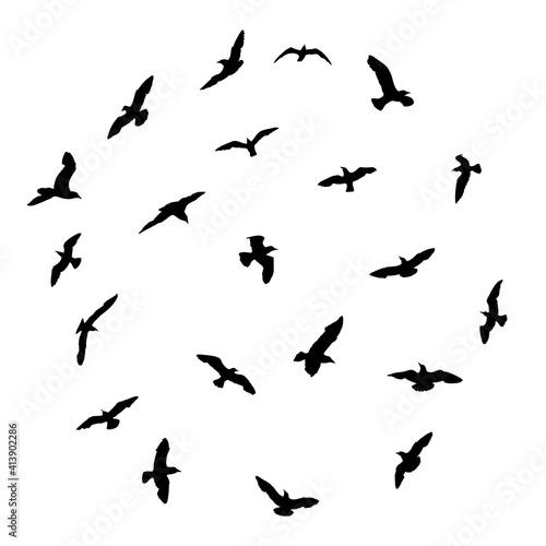 Fotografie, Obraz Silhouette set of flying seagulls birds on white background