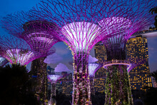 Solar-powered Supertrees At Dusk In Gardens By The Bay, Singapore.