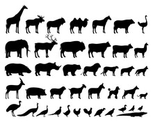 Vector Domestic And Wild Animals Silhouettes Collection. Livestock And Poultry Icons. Herbivore And Carnivore, Predators And Prey