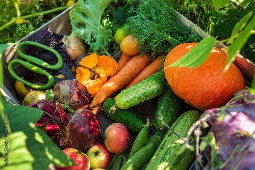 fresh organic vegeatables in the box Fototapete