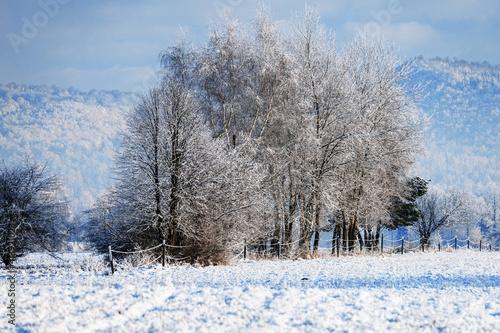 trees in winter © Daniel Vincek