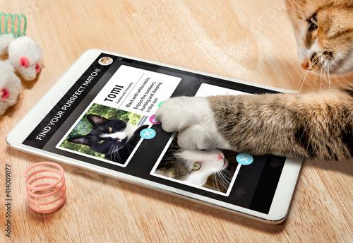 Fotografie, Obraz Cat using online dating app on tablet