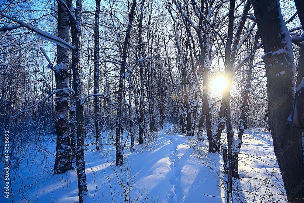 Fototapeta landscape winter forest, seasonal beautiful view in snowy forest december nature