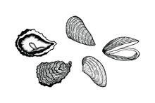 Set Of Marine Livestock. Oysters And Mussels. Isolate On White Background, Outline, Hand Drawing.