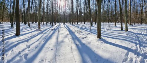 Obraz Panorama lasu w piękny słoneczny dzień zimą - fototapety do salonu