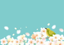 メジロのいる春の桜