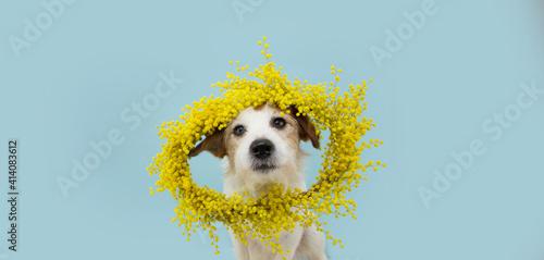 Dog spring Fototapet