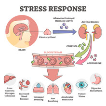 Stress Response Anatomical Scheme With Body Inner Reaction Outline Concept
