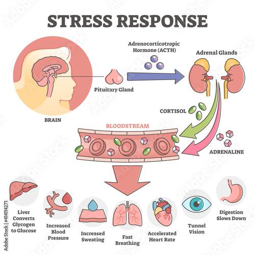 Fototapeta Stress response anatomical scheme with body inner reaction outline concept obraz