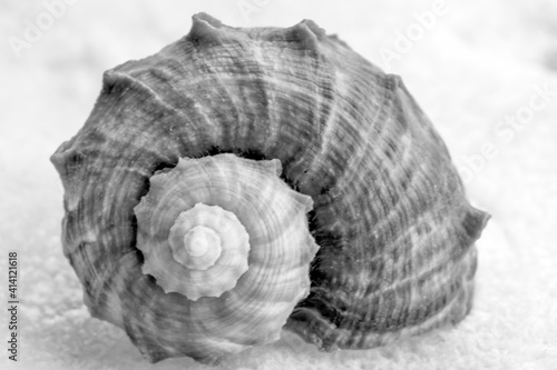 Photo black and white photo from a seashell
