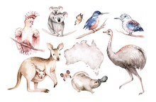 Watercolor Australian Cartoon Kangaroo Emu, Koala And Flying Fox, . Australian Kangaroos Set Kids Illustration. Nursery Wallpaper Art