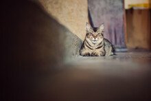 A Street Cat Is Resting While Looking Ahead. (Selected Focus And There Is A Negative Space For Wording)